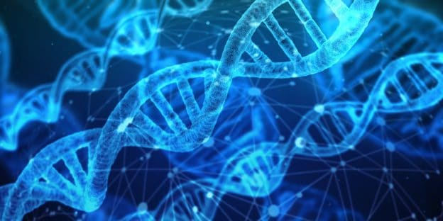 DNA Template – What Is It?